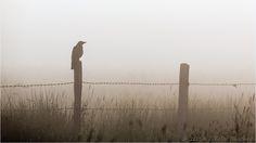 Heute, vor Sonnenaufgang im Moor... von Felix Büscher