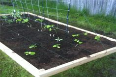 How to Create a Raised Bed Vegetable Garden Layout