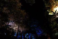 Enchanted Forest 2011 (Explorers Garden – Pitlochry, Scotland). http://lisalibsl.wordpress.com