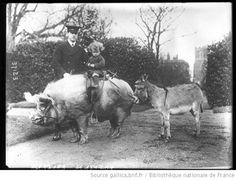 Animaux apprivoisés de Mr Wingfield à Ampthill [enfant assis sur un cochon sellé] : [photographie de presse] / [Agence Rol] - 1914