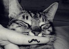 moustache !!!!