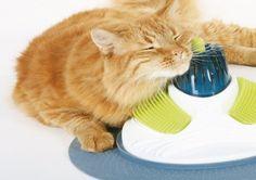 10 věcí, které si vaše kočka zamiluje