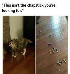 Cat stealing chapstick