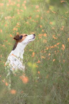 It's officially the beginning of spring! by Heavenly Pet Photography #dog #photo…