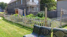 Tamarack's community garden.