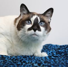 November is National Adopt a Senior Pet Month! Meet Patches, just one of the wonderful senior pets awaiting a home at OHS.