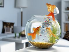 Click here to download in HD Format >>       Fish Jump Wallpapers    http://www.superwallpapers.in/wallpaper/fish-jump-wallpapers.html