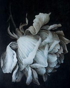 Wouter Dolk is a Dutch artist living & working in Germany. Via Bo Bedre magazine. Illustration Botanique, Illustration Art, Poster Mural, Art Floral, Botanical Art, Painting Inspiration, Flower Art, Painting & Drawing, Art Drawings