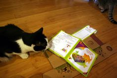 Harry the Farm cat reads the directions to put together the Farm cats new CatAmazing toy
