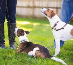 Understanding Dog-Dog Sociability | Paws Abilities