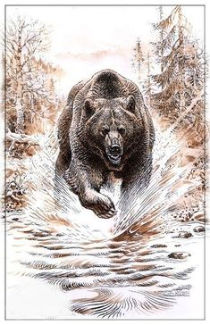 Bear Claw Tattoo, Bear Tattoos, Animal Tattoos, Grizzly Bear Drawing, Ours Grizzly, Elk Pictures, Cave Bear, Native American Tattoos, Pencil Drawings Of Animals