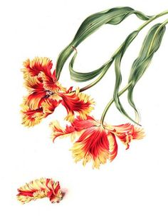 Annie Patterson   American Society of Botanical Artists