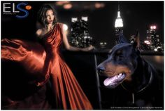 #gucci #collection 2015 #advertising magazine. Shoot location: #NewYork #manhattan. #SuperModel @qundperseofromliparland  #dog #dobermann #celebrity #model #supermodel #instadog #petistagram #fashion #style #stylish #beauty #doberman_pinschers #beautiful #photooftheday #love #cute  #fashionweek #glam #milan #paris #miami #ny #instafashion #fashionpost