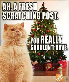 What have we learned? Cats are out to ruin your Christmas. Especially this one.