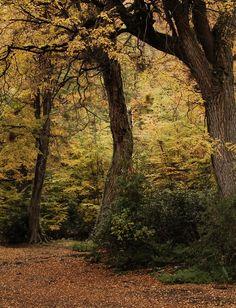 Forest (Bosque) | Tierra del Fuego | Argentina