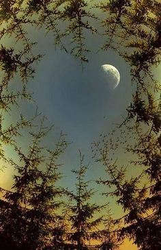 The moon through the mother nature moments - Beautiful Mother Nature Beautiful Moon, Beautiful World, Beautiful Places, Beautiful Pictures, Dame Nature, Heart In Nature, Shoot The Moon, Moon Pictures, Good Night Moon