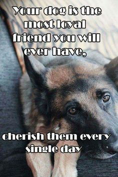 ♡ The German Shepherd