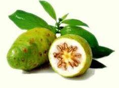 Khasiat buah mengkudu adalah untuk kesehatan dan kecantikan