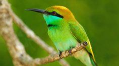 Macro photography of green bird wallpaper - 1920x1080