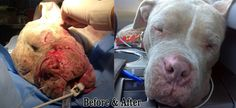 <b>This amazing story about Cadence, a rescued bait dog, is probably going to get you a little choked up.</b> <i>Warning: Images are a little intense.</i>