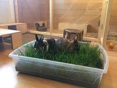 Kaninchen zu Hause