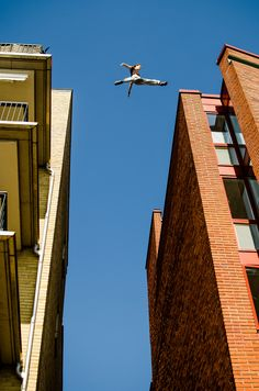"""Parkour/Free-Running/Freerunning/ninja- """"I believe I can fly..."""""""