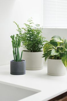 Plant Pot 191 fits naturally in minimalist spaces, with its clean silhouette and dry textured glaze. It is perfect for showcasing plants such as cacti with strong vertical movement. The drainage hole at the bottom allows water to drain freely and keeps plants healthy. It comes with a saucer so that it is also suitable for growing plants indoors.