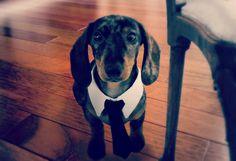 Custom Pet Necktie Collar Dog Tie Collar Dog by youhadmeatwoof, $29.00