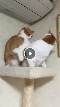funny cats and dogs compilation. funny animals compilation try not to laugh. funny animals 2019 try not to laugh. Funny Cute Cats, Funny Cats And Dogs, Cute Cat Gif, Funny Cat Memes, Funny Cat Videos, Cute Cats And Kittens, Cute Funny Animals, Kittens Cutest, Most Cutest Dog