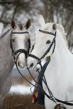 Two super cute show ponies