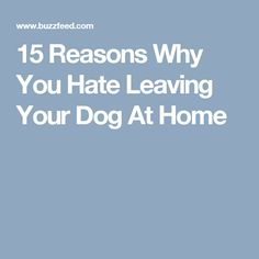 15 Reasons Why You Hate Leaving Your Dog At Home