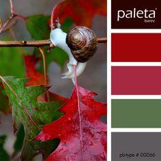 PALETA #00051 - #00100