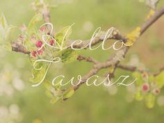 Hello tavasz – Renovatúra Műhely Hello Spring Wallpaper