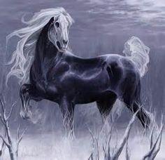 magnus pferd - Ecosia