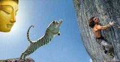 Bị hổ rượt chàng trai bám vào cành cây sắp gãy cầu cứu Phật Đức Phật nói: Con hãy buông   Một người đàn ông bị con hổ dữ rượt đuổi. Anh chạy thục mạng không dám ngoái đầu nhìn lại. Cuối cùng khi đến bờ vực thẳm anh không thể chạy được nữa trong khi đó con hổ vẫn còn ở phía sau.  ảnh minh họa  Lúc này người đàn ông rơi vào tình thế tiến thoái lưỡng nan: Một bên là con hổ đói đang hau háu nhìn còn một bên là vực thẳm sâu hun hút. Anh nhìn xuống từ trong vách đá dựng đứng kia có một cành cây…