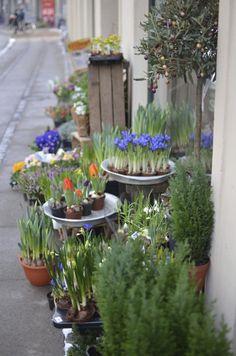 Flower shop in Copenhagen, Denmark -   ASPEN CREEK TRAVEL - karen@aspencreektravel.com