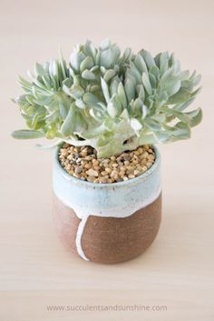 Isn't+this+crested+Topsy+Turvy+succulent+fun-