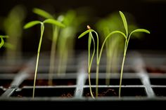 Starting your Own Seedlings | Green Idea Reviews