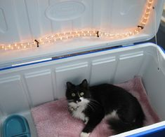 Cat House for winter. Cut hole out of side of cooler large enough for cat to get through, use LED lights at top. Cover hole with a flap of fabric so cat can get in & out. Keep cat warm all winter.