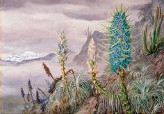 http://en.most-famous-paintings.com/Art.nsf/O/AQRHMY/$File/Marianne-North-The-Blue-Puya-and-Cactus-at-Home-in-the-Cordilleras-near-Apoquindo-Chili.jpg
