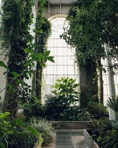 Another architecture nature plant aesthetic, garden ve plants. Plant Aesthetic, Nature Aesthetic, Nature Plants, Foliage Plants, Slytherin Aesthetic, Photocollage, Architecture, Botanical Gardens, View Photos
