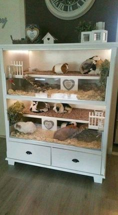 for guinea pigs but cute for hamsters or gerbi. -Not for guinea pigs but cute for hamsters or gerbi. Guinea Pig Hutch, Guinea Pig House, Pet Guinea Pigs, Guinea Pig Care, Guinea Pig Food, Bunny Cages, Hamster Cages, Diy Bunny Cage, Rabbit Cages