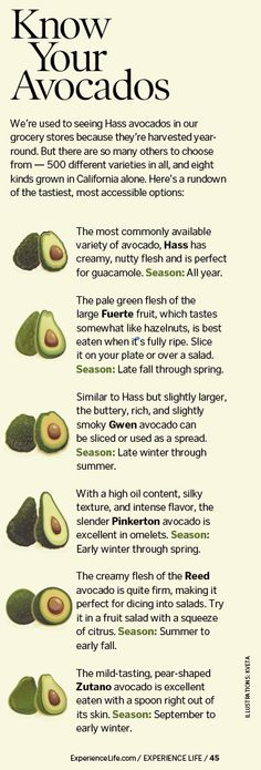 Know Your Avocados