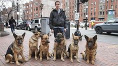Dog Whisperer: Trainer Walks Pack Of Dogs Without A Leash | Watch the video - Yahoo Lifestyle UK UK