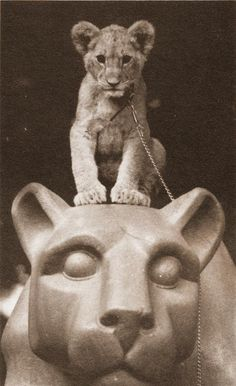 PENN STATE – VINTAGE – This picture was found in The Penn Stater Magazine from Sept./Oct. 1981.