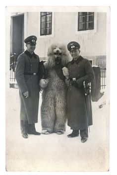 Bizarre Found Photos Follow A Man In A Bear Suit Through Nazi Germany