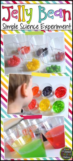 Jelly Bean Simple Science Experiment with Free Printable- Mrs. Jones' Creation Station