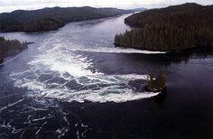belize inlet bc - Google Search Sunshine Coast, Vancouver Island, Belize, Diving, Charlotte, Middle, Canada, Boat, Tours