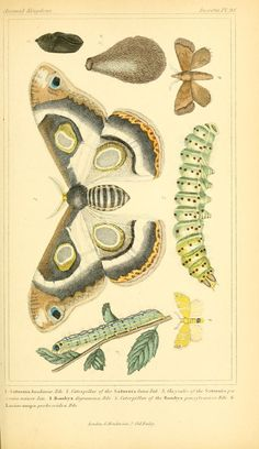 v.4 plates - The animal kingdom, arranged according to its organization, serving as a foundation for the natural history of animals : - Biodiversity Heritage Library