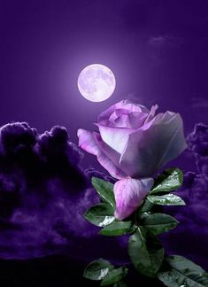 By Artist Unknown. Beautiful Moon, Beautiful Roses, Pretty Flowers, Purple Flowers, Moon Pictures, Nature Pictures, Beautiful Pictures, Sky Moon, Moon Art